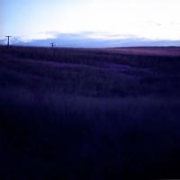 Field (L)